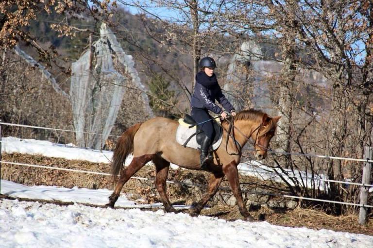 Cours d'equitation à Gap (Charance)