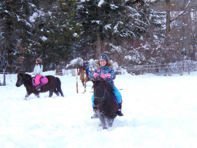 Poney dans la neige