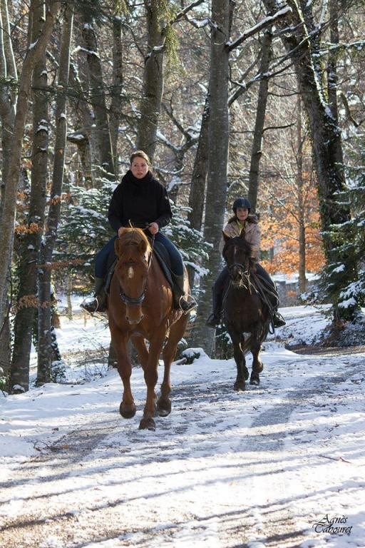 Trotting en hiver dans les bois de Charance
