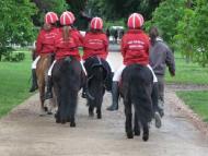 elevage du rigodon poney sport